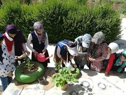 کارگاه عملی آموزش کاشت گل و گیاه