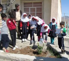 ویژه برنامههای روز درختکاری در مراکز کانون استان قزوین
