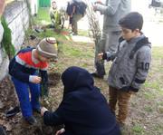 اعضای کانون مازندران روز درختکاری را گرامی داشتند