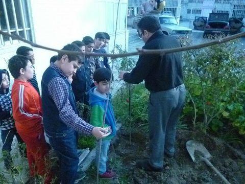 آشنایی با فواید درخت در مرکز شماره4 مشهد