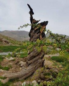 استقبال کودکان و نوجوانان مرکزی از مهرواره عکس نوشت